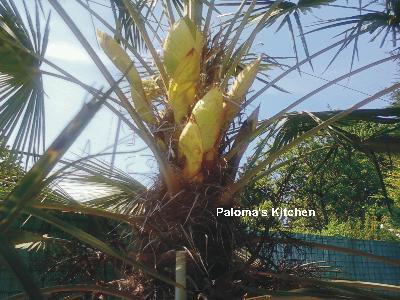 palmie2.jpg